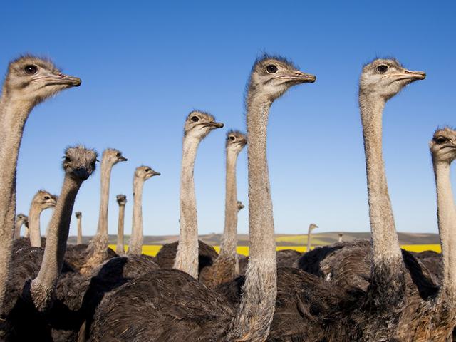 West Coast Ostrich Ranch